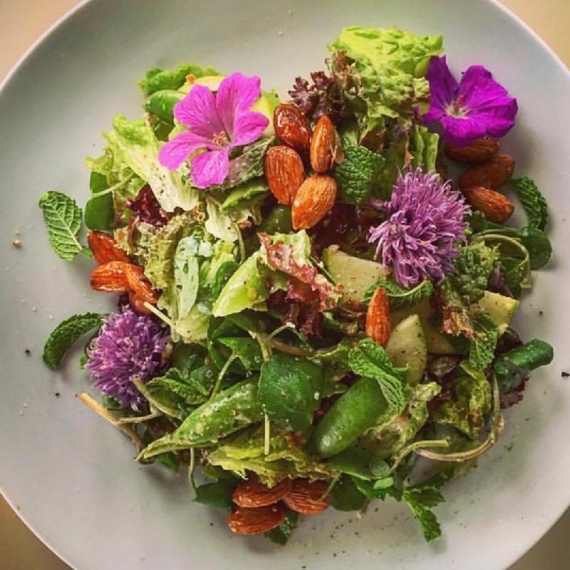 Spring Salad - Candied Almonds - Preserved Citrus Vinaigrette